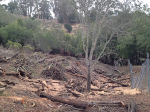 b2ap3_thumbnail_Ring-Mountain-Burn-Pile.png